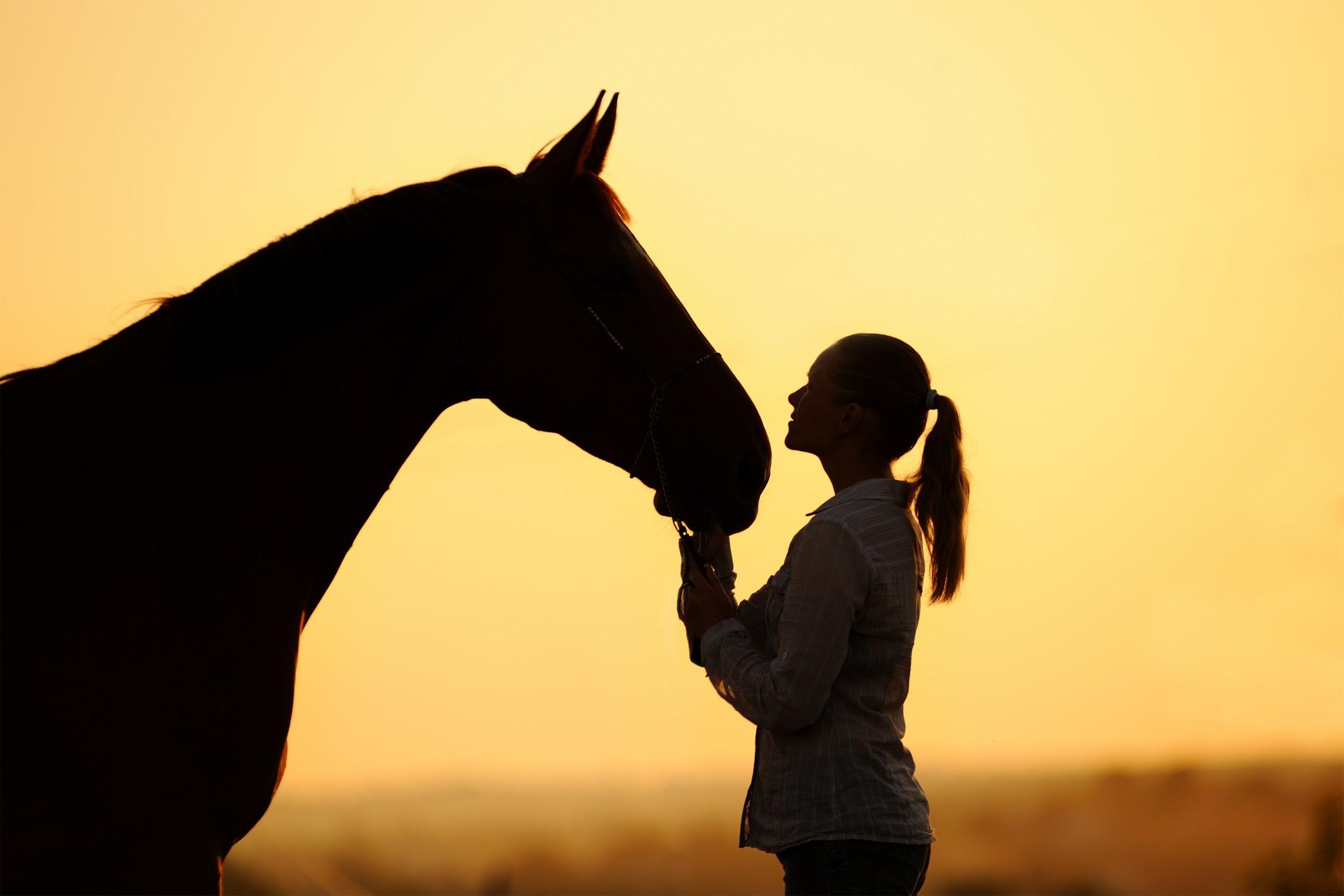 equine services  Dalhart, TX